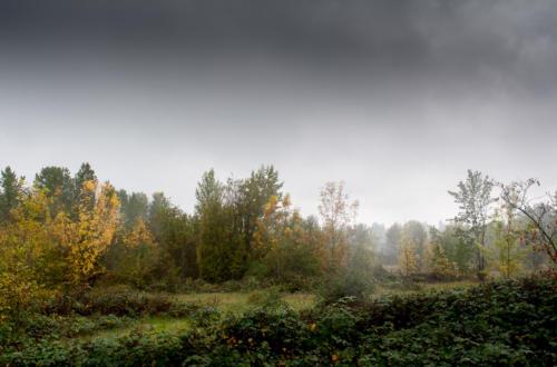 Wetlands, October