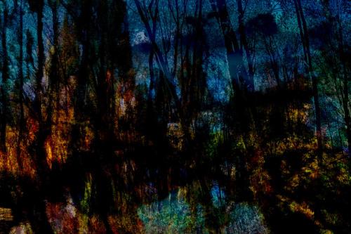 Woodland Dusk